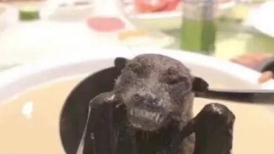 Photo of بعد التحذير من شوربة الخفاش.. وجبات مخيفة حول العالم