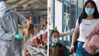 Photo of أوجه التشابه والاختلاف.. هل توجد علاقة بين فيروس كورونا وانفلونزا الطيور ؟