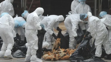 Photo of 7 سنوات مرت على إنفلونزا الطيور.. تعرف على لفيروسات الأكثر انتشارا