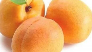 Photo of خبير التغذية يوضح فوائد تناول المشمش