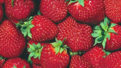 Photo of استشاري السمنة والتغذية العلاجية يكشف فوائد عديدة لتناول الفراولة