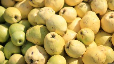 Photo of تعرف على فوائد تناول الجوافة