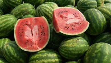 Photo of طلب إحاطة حول البطيخ المُسرطن لرئيس الوزراء ووزارتى الزراعة والصحة